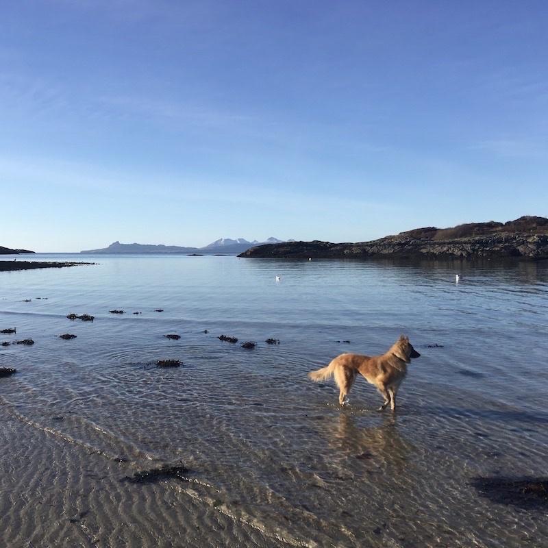 Glenuig-Inn-Dog-Friendly