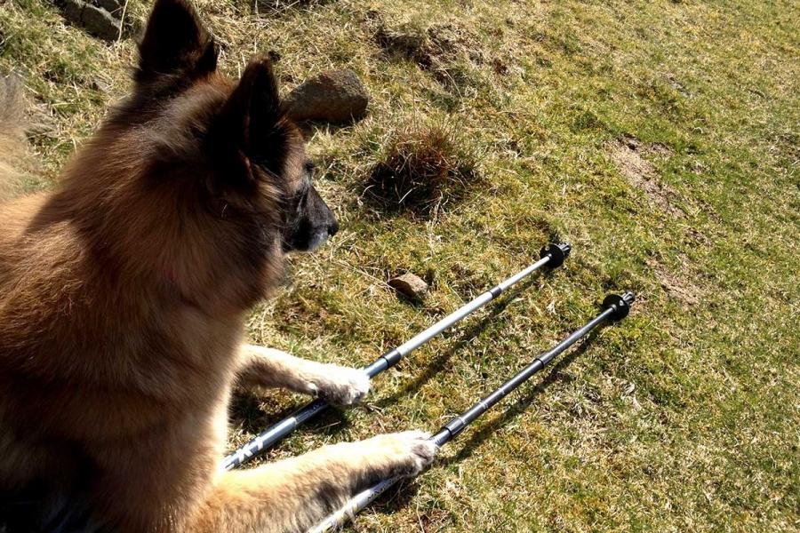 glen-uig-inn-sound-of-arasaig-dog-friendly-5