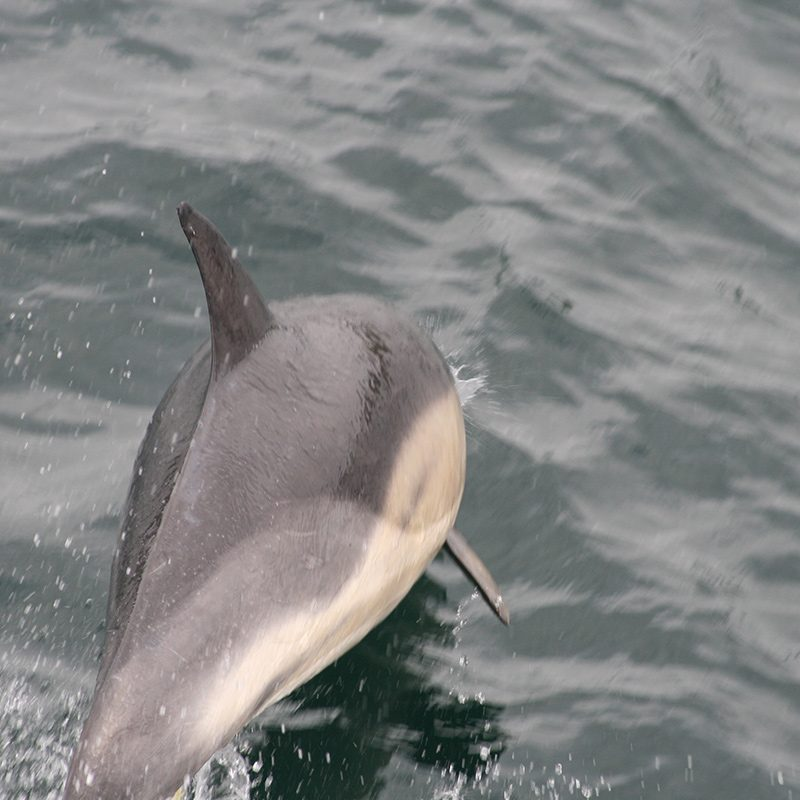 Glenuig Inn - Arisaig Dolphins